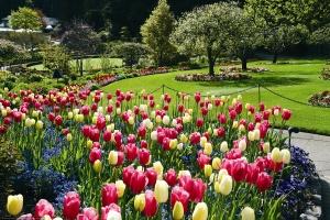 blooming-springtime